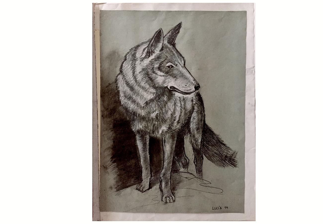 Dibujo a carboncillo de Lobo